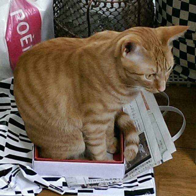 キナコ♂ : 箱が小さすぎるような・・・