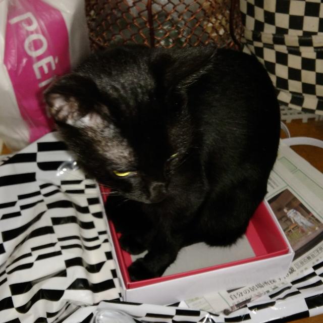 アズキ♀ : 箱入り娘