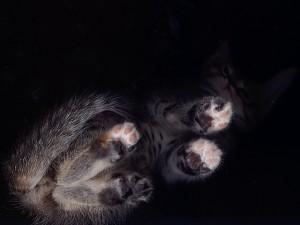 子猫の「ちい」をスキャン