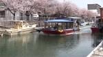 高知市堀川の桜並木と観光遊覧船20110411