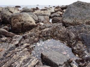 室戸岬散策:潮だまり