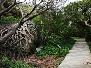 室戸岬散策:遊歩道・アコウ樹