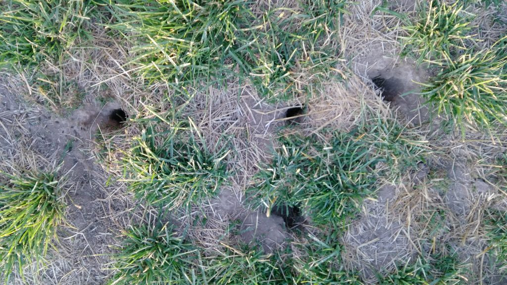 ネズミの巣を発見
