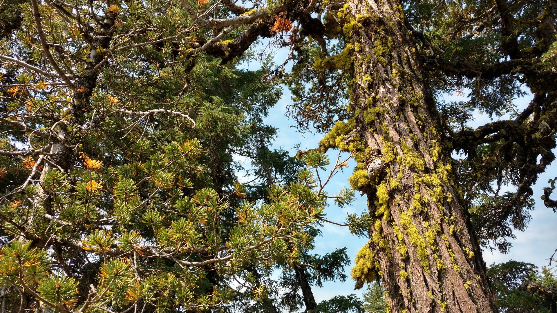 古い木は苔むしています
